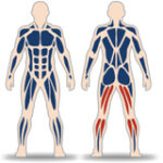 LEGS CURL IN STANDING POSITION WITH VARIABLE LOAD - 4